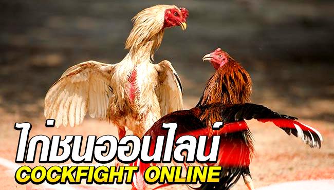 แทงไก่ชนออนไลน์